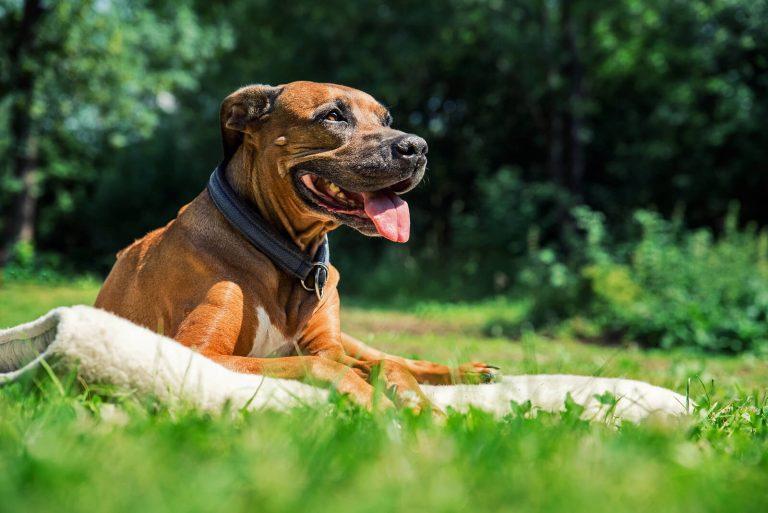 ¿Cómo evitar el desarrollo de sarro en los perros?