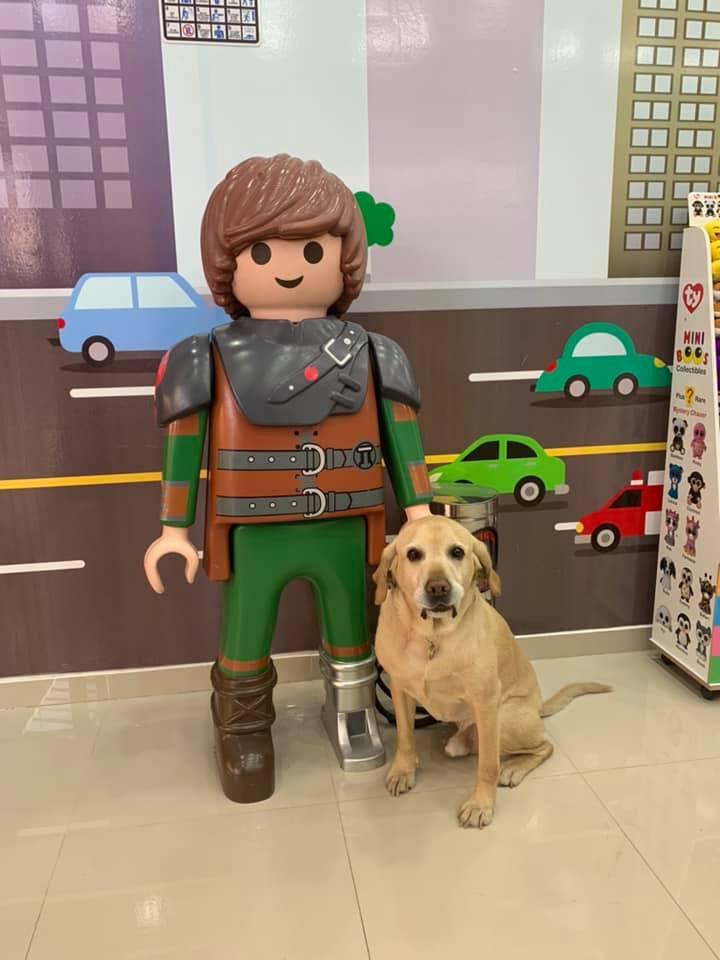Perro en la una tienda posando