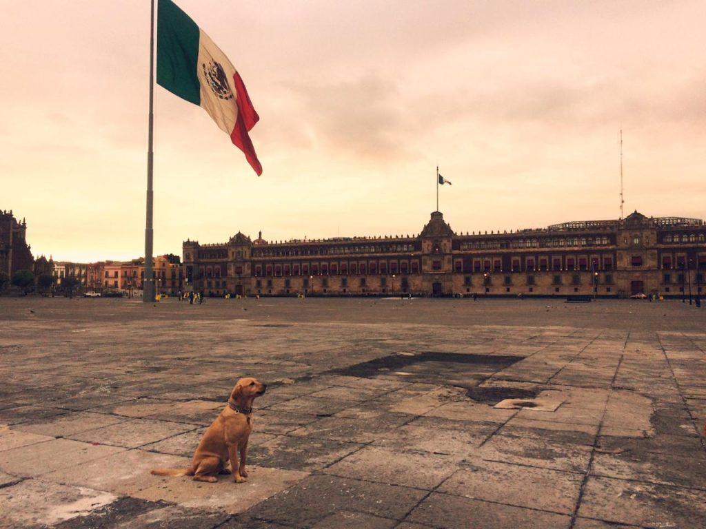 Perro en el zócalo de la Ciudad de México