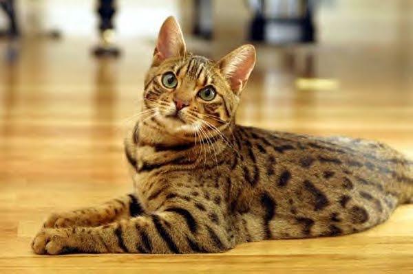 Día Internacional del Gato: 5 datos curiosos sobre los mininos