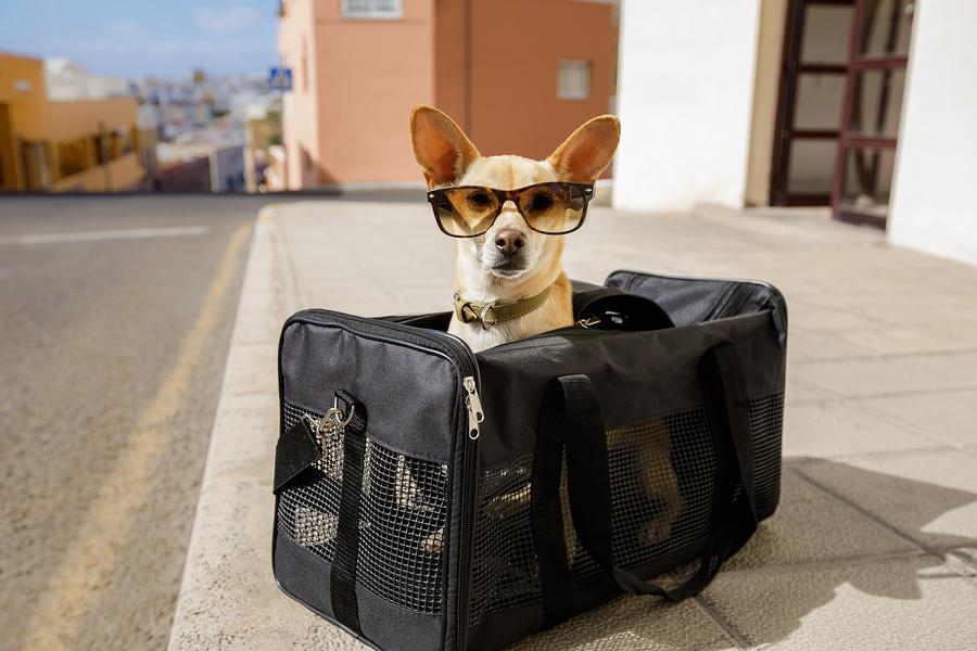Perro en transportadora