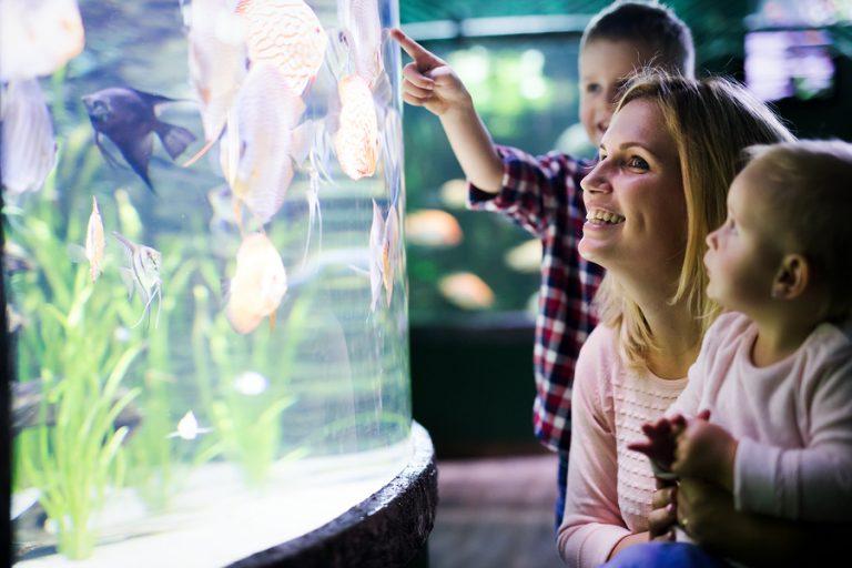 Artículos que todos los amantes de los peces quieren tener y pueden conseguir en línea