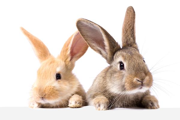 Tips para alimentar a un conejo