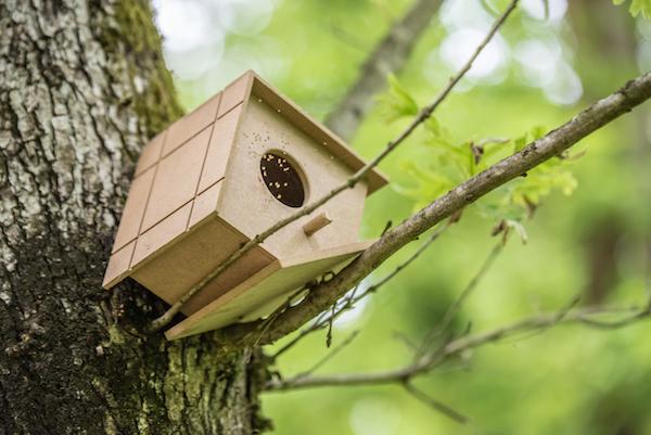 Cuidados básicos para tener un pájaro en casa