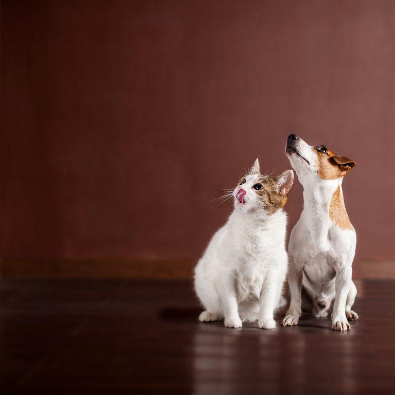 Estos son 5 tips para dar una correcta dieta mixta a gatos y perros