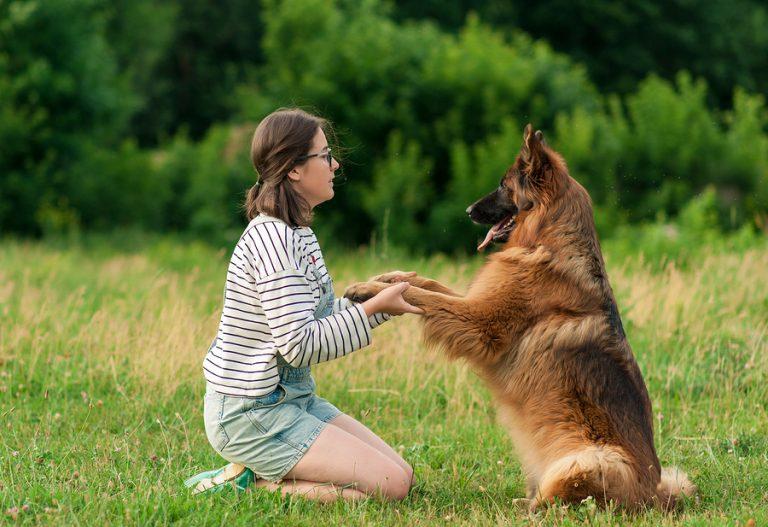 ¿Tienes una raza grande de perros? Estos productos que puedes conseguir en línea te interesan