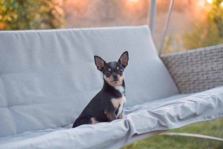 Productos para perros de raza pequeña que puede comprar