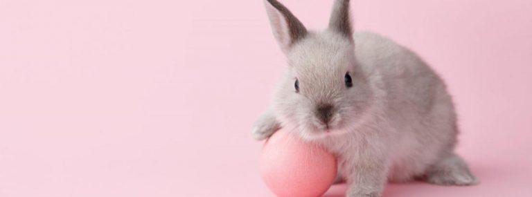 ¿Tienes un conejo? Te recomendamos estos 5 productos que le puedes comprar en línea