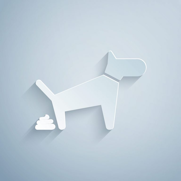 ¿Qué afectaciones a la salud tiene el no recoger las heces de tu perro?