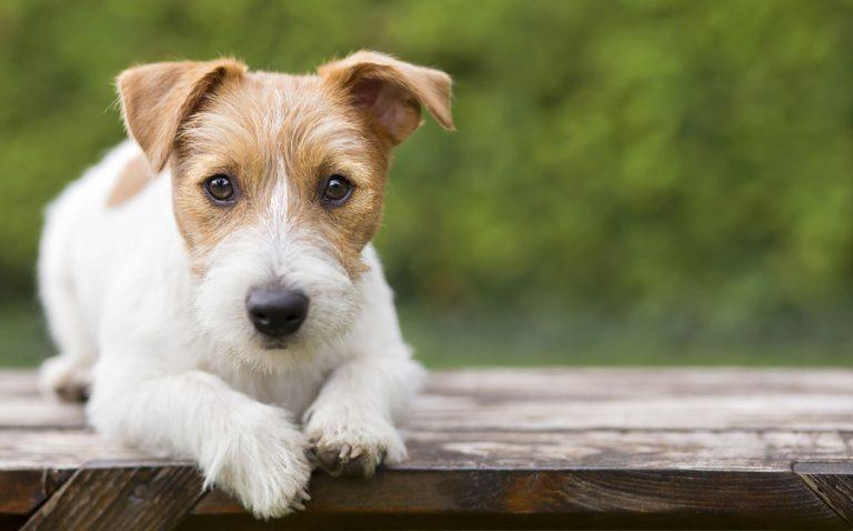 5 productos para el cuidado del pelaje de tu perro
