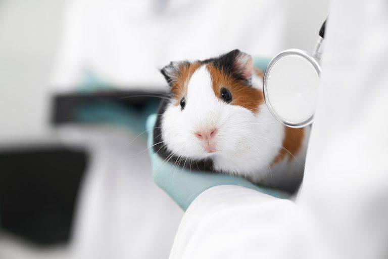 Si tienes un hámster, te recomendamos estos 5 productos para tu mascota