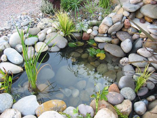 ¿Quieres darle un hogar único a tus peces? Sigue estos pasos para diseñar un estanque casero