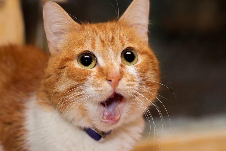 ¿Por qué los gatos y perros huyen de los juegos pirotécnicos?