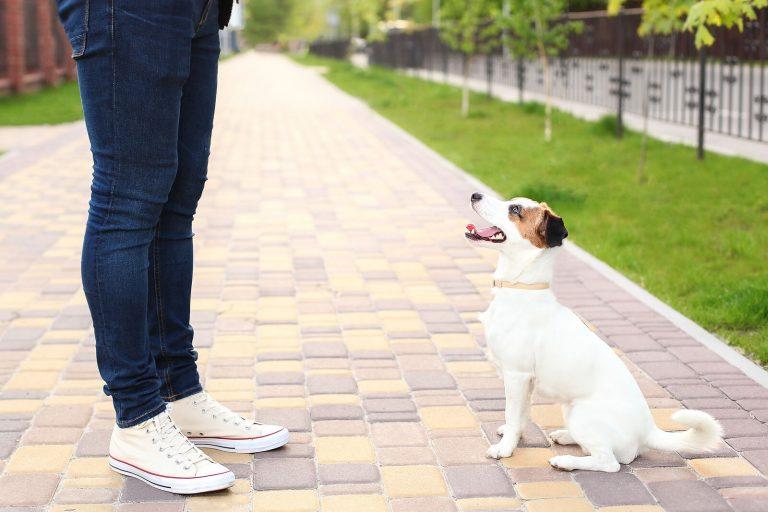 ¿Entrenarás a tu perro?, sigue estos consejos para que sea un éxito