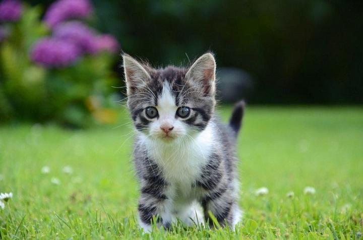 Estas son algunas razones del porqué debes cuidar los bigotes de tu gato