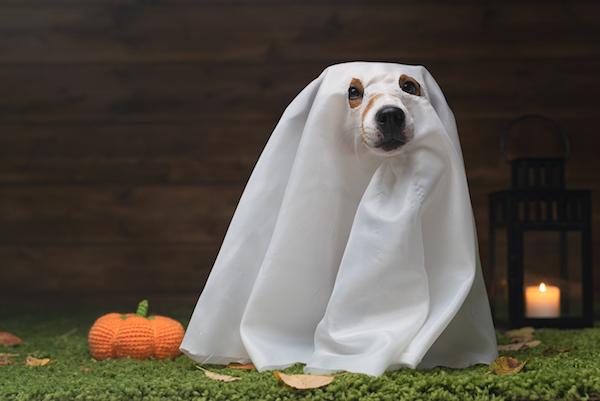 Ten en cuenta estas consideraciones antes de colocar adornos para Halloween