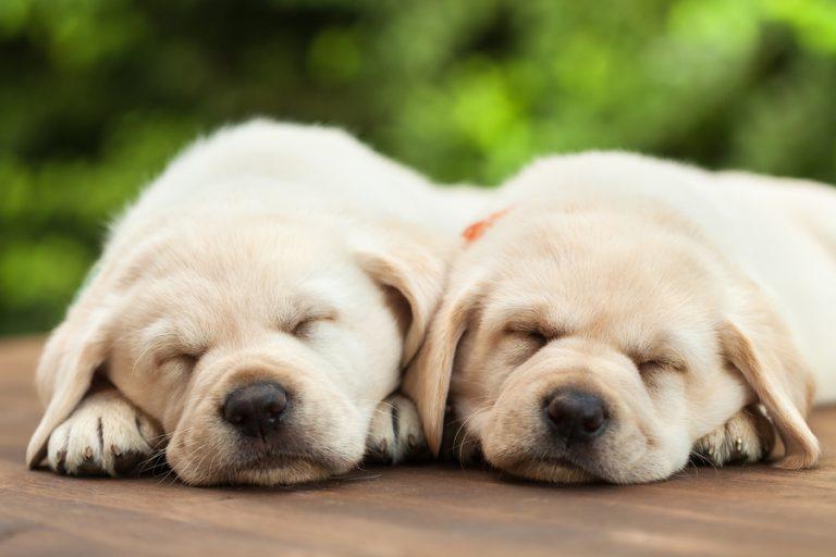 ¿Tienes un perro recién nacido? Estos son los cuidados que necesita
