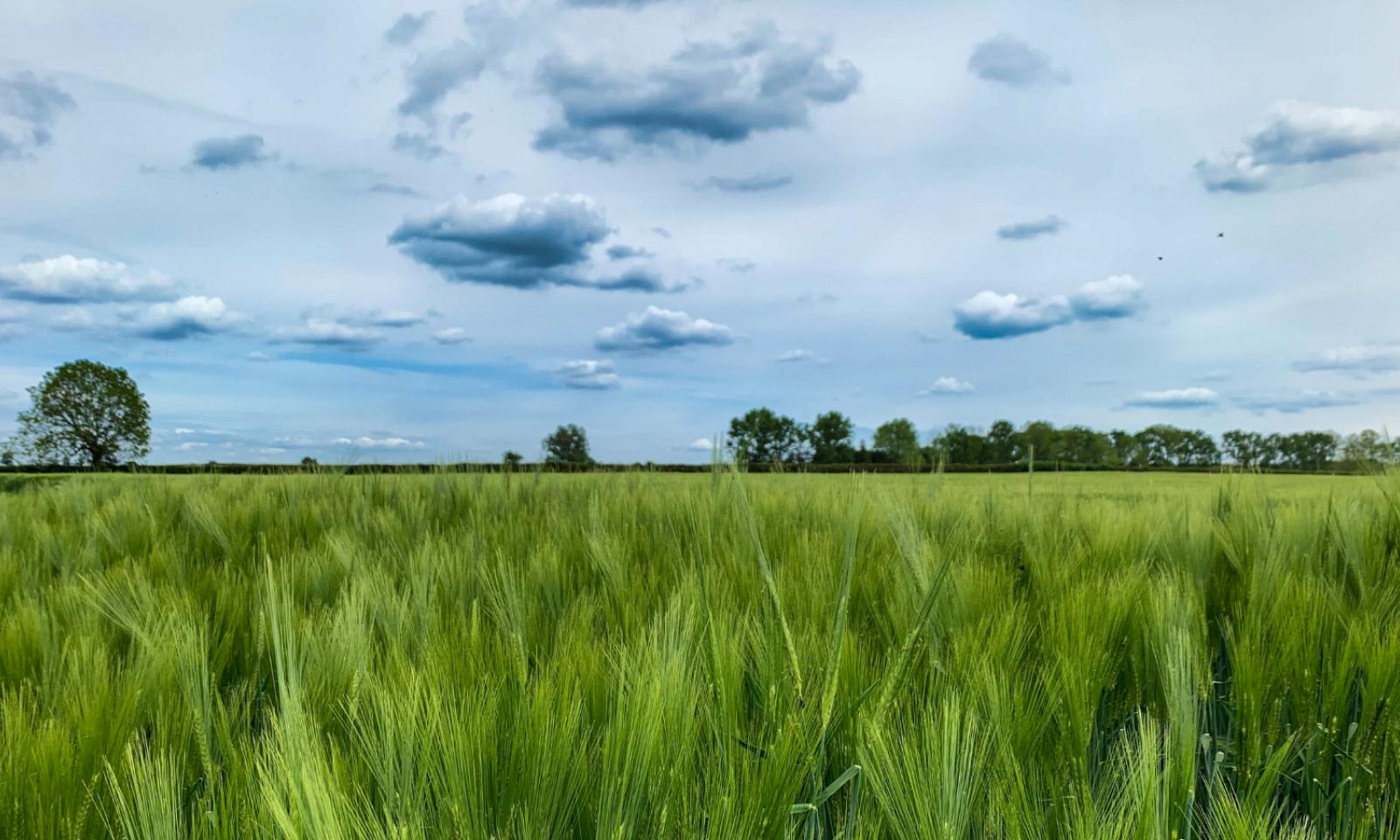 Pathways To A Zero Carbon Oxfordshire Qa With Sam Hampton