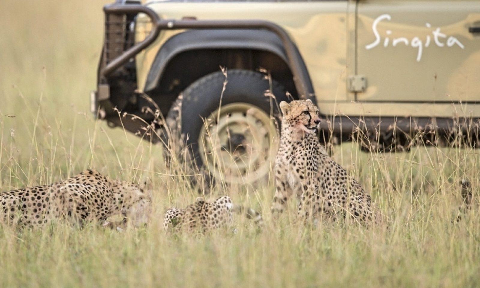 Singita Serengeti Game Drive