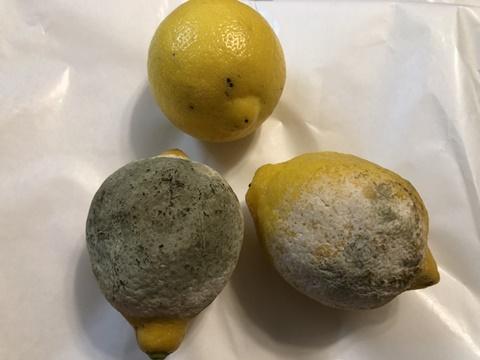 レモンのカビ