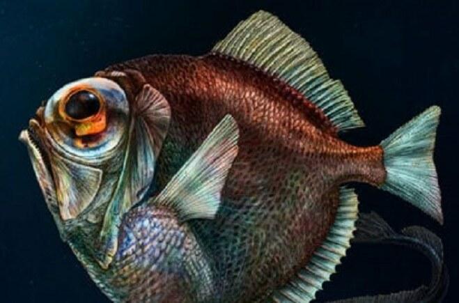 Độc đáo: Cá sống trong bóng tối đại dương vẫn nhìn thấy màu sắc