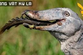 9 Loài Động Vật Phi Thường Mà Bạn Chưa Từng Biết Tới