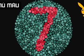 Bạn Bị Mù Màu Nếu Nhìn Thấy Số 7? Làm Thế Nào Để Biết Mình Có Mù Màu Không?