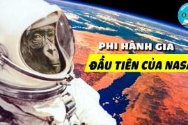 Hành Trình Của Ham – Phi Hành Gia Vũ Trụ Chuyên Nghiệp Đầu Tiên Của NASA