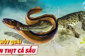 Thủy Quái Nước Ngọt Xơi Thịt Cả Cá Sấu – 10 Loài Thủy Quái Nước Ngọt Ghê Gớm Nhất