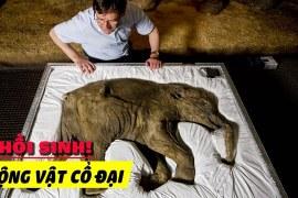 Chúng Ta Sẽ Đem Các Loài Động Vật Tiền Sử Quay Trở Lại Như Thế Nào?
