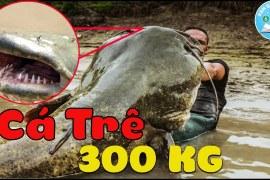 10 Loài Sinh Vật Đáng Sợ Nhất Được Tìm Thấy Dưới Những Dòng Sông
