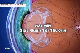Bí ẩn các giác quan : Đôi mắt – Giác quan tối thượng – Phim khoa học – Thuyết minh