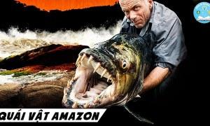 Những Loài Sinh Vật Huyền Thoại Ở Rừng Mưa Amazon