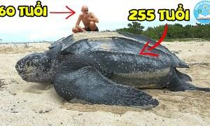 💥10 Loài Động Vật Sống Lâu Nhất Trên Trái Đất Có Thể Bạn Sẽ Không Tin | Giải Mã Bí Ẩn | XGKH