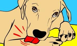 Tại Sao Chó Liếm Bàn Chân Và 29 Sự Thật Khác Về Loài Chó