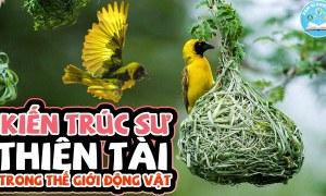 Loài Người Cũng Phải Thán Phục Trước Tài Nghệ Xây Tổ Chim Siêu Thực Và Đẳng Cấp Này | Bí Ẩn Động Vật