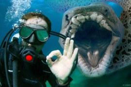 18 Quái Vật Biển Đáng Sợ Hơn Cả Megalodon