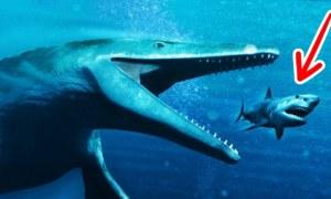 Sự Thật Và Lầm Tưởng Về Siêu Cá Mập Megalodon Và Nhiều Quái Vật Biển Khác