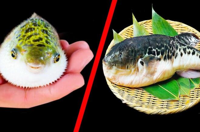 Nếu Bạn Đến Nhật Bản, Đừng Ăn Loại Cá Này