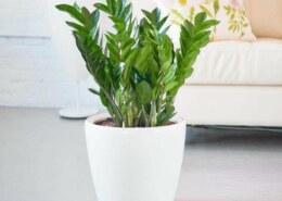 Những loại cây phong thủy nào thường được đặt trong nhà ở?
