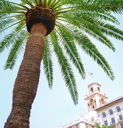 A palm tree at The Breakers