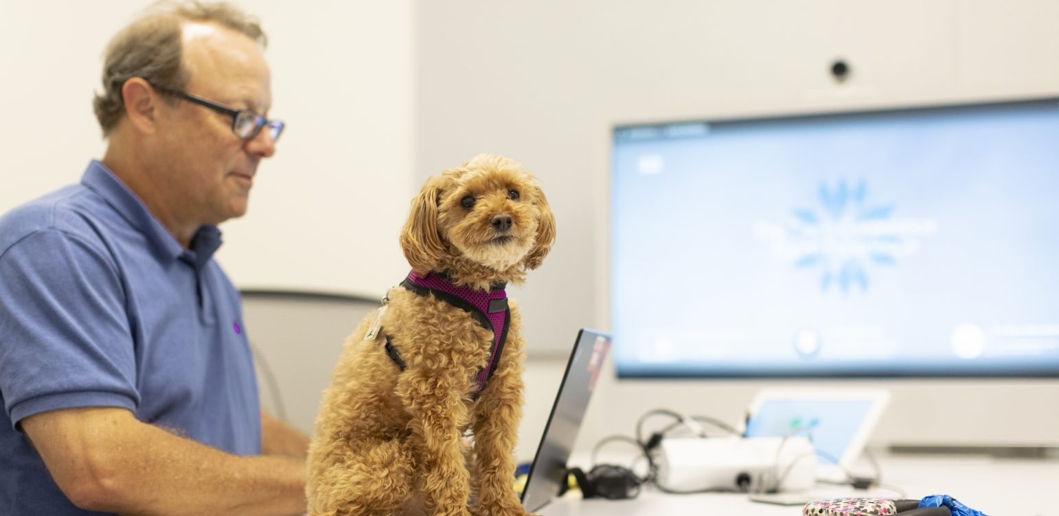 Cute scruffy brown dog sitting on an office table while man in background wearing glasses types on his computer