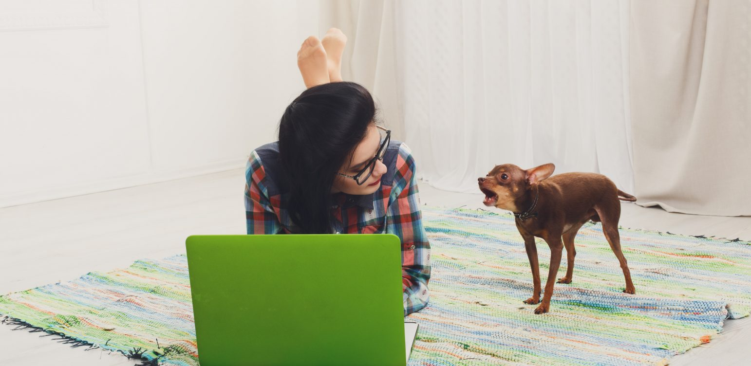 Young girl in computer glasses lying on carpet with laptop and dog chihuahua. Hipster student, freelancer woman at home. Relax with computer. Girl with barking small dog. Soft tone, high key.