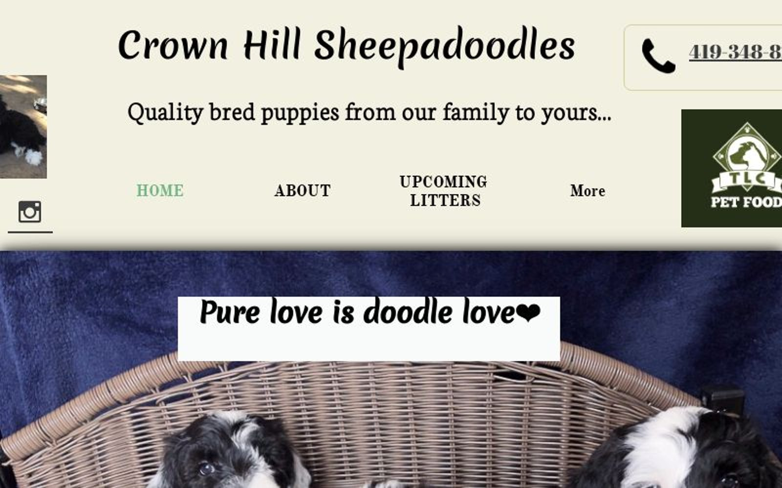 Doodle Puppies for sale Ohio, Hypo allergenic, non-shedding