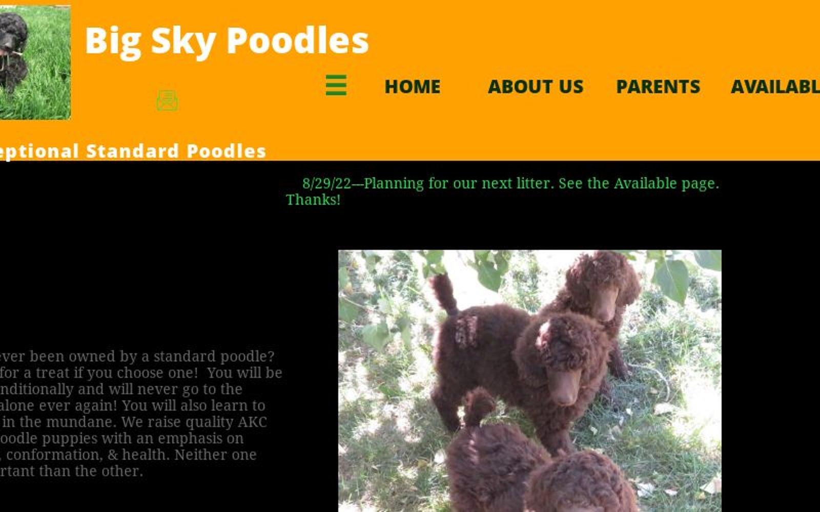 www.bigskypoodles.com