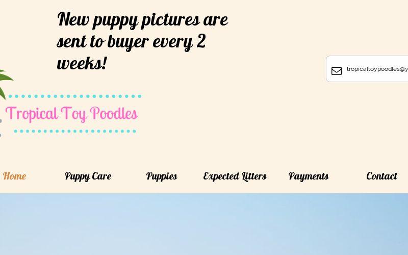 www.tropicaltoypoodles.com