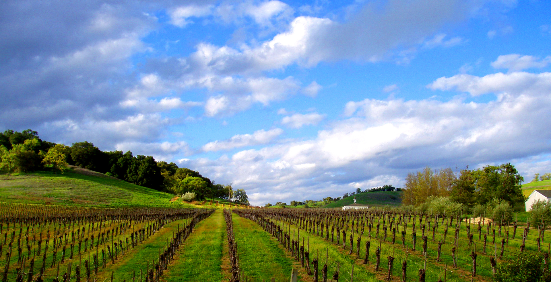 Vine Rows and Clouds