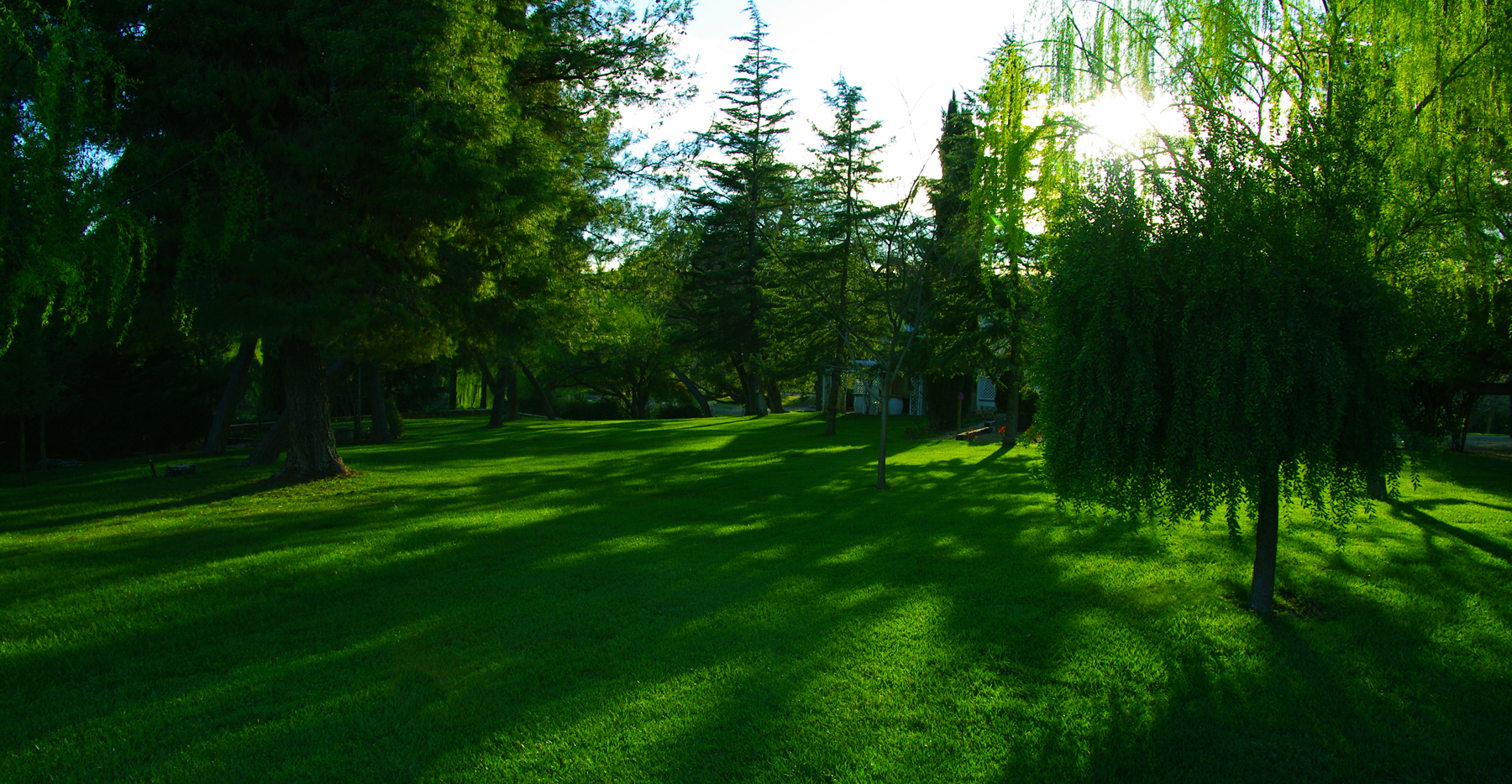 Shadows on the Lawn