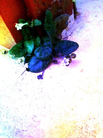 Magic Herb