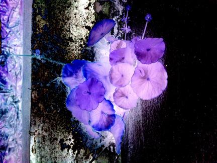 violet life